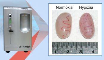 Exposición a la Hipoxia y Producción de Testosterona