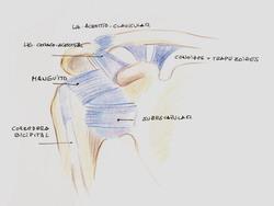 dolor en la axila izquierda al mover el brazo