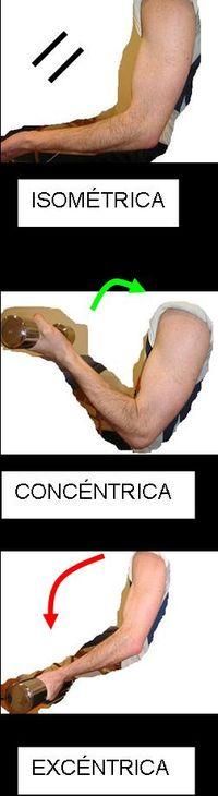 Fuerza muscular biolaster for Fuera definicion