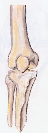 rodilla huesos articulacion