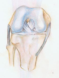 rodilla ligamento articulacion